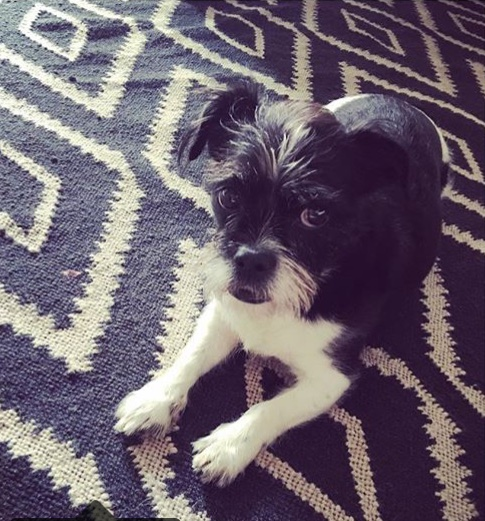 Bella on coordinating carpet
