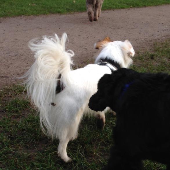 Ollie ignoring his friend Jeffy