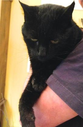 George Cat 1