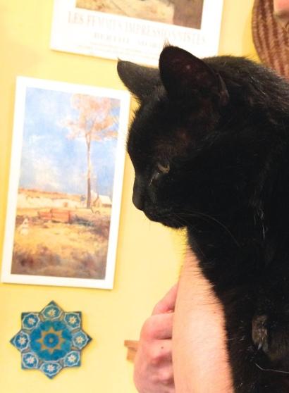 George Cat 2