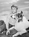 93px-Jon_Provost_Lassie_1962